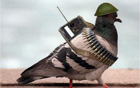 The New and Shocking way Carrier Pigeons are Being Used!