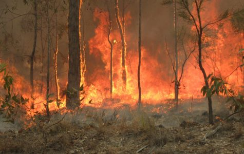 Fires Rage Through Australia, Major Losses